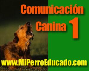 adiestramiento canino, educación de perros