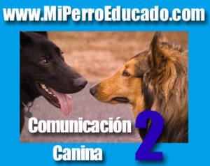 educación canina, adiestrar un perro