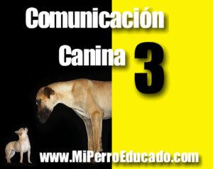 etologia canina, educación canina