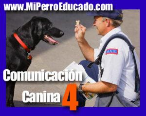 educación canina, adiestramiento canino