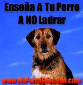 Como Enseñar A Tu Perro A No Ladrar