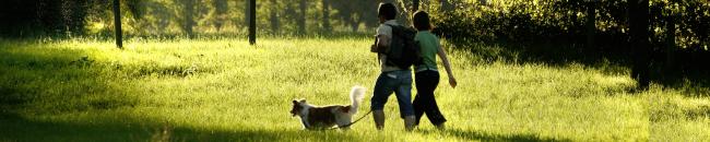 Mi Perro Me Jala Cuando Camina