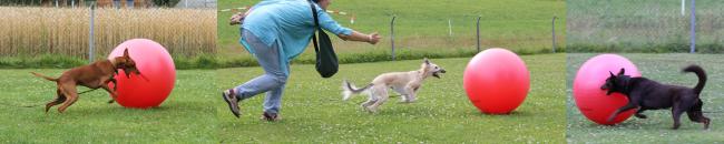 Adiestramiento canino con juegos